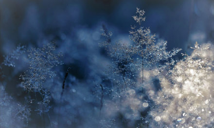 Winter Wisdom: Dancing with Fear