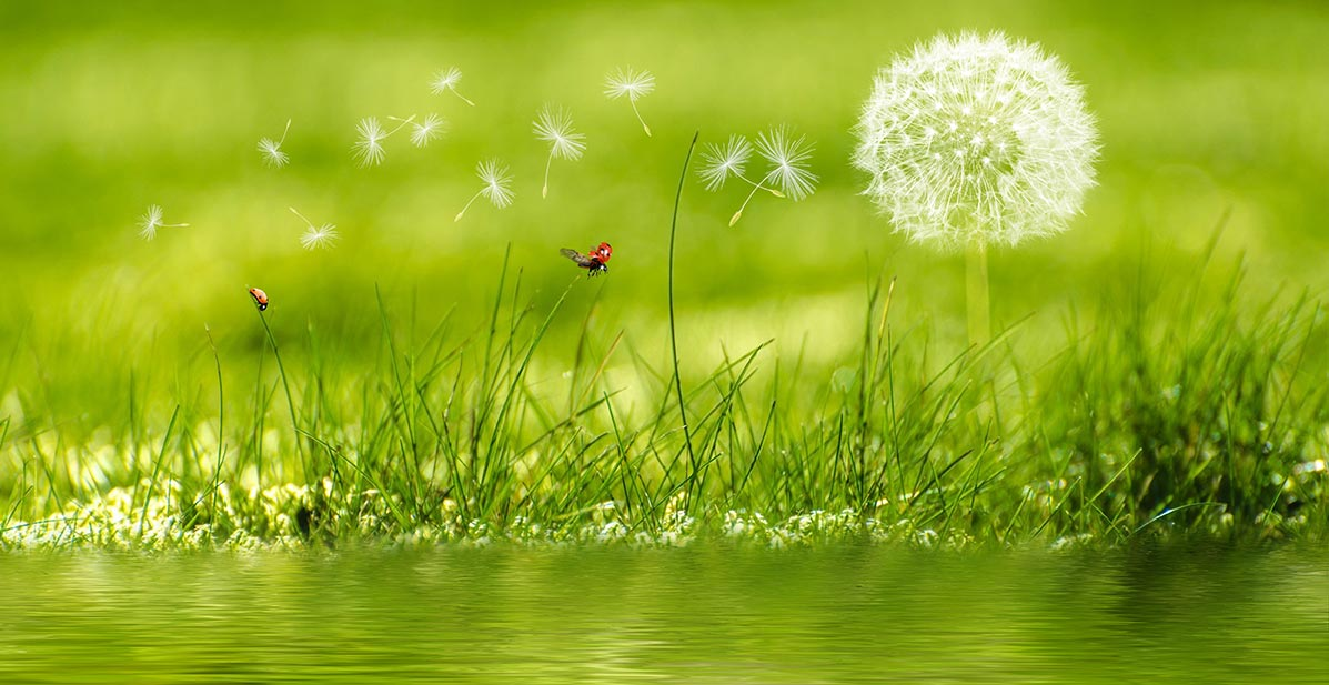 Life Cycle Living: Bringing forth the gifts of a life aligned with Nature