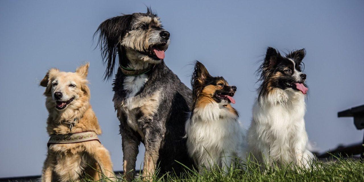 El Año del Perro de Tierra: Lealtad, energía nutricia y energía de comunidad