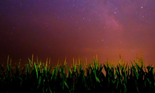 The Divine Mystery of Corn