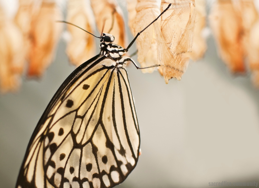 Sacred Emergence, Butterfly, Initiation